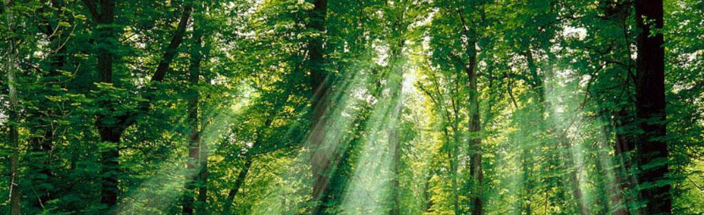 header_forest